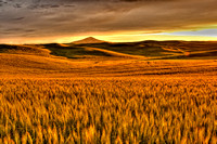 Sunset over the Palouse Wheat