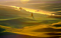 Palouse Rolling Hills_7006097