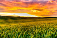 Sunset over the Palouse Wheat Fileds